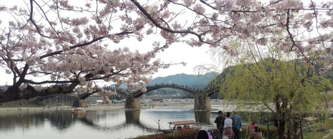 金地峡,桜