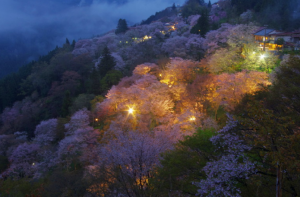 吉野山のライトアップ
