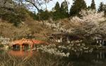 醍醐寺の桜2018の開花状況と予想!見ごろと花見ライトアップ画像と駐車場地図