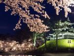 高田公園の桜2018の満開予想と見頃!開花状況と駐車場のアクセス地図